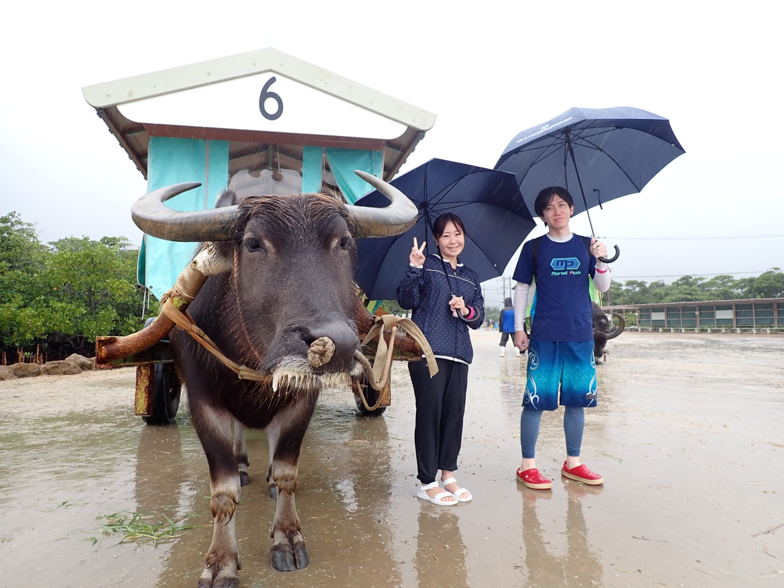 雨でも満喫!ピナイサーラの滝カヌーand由布島観光ツアー