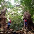 半日でも西表島のジャングルを満喫できる!西表島 ピナイサーラの滝 半日ツアー