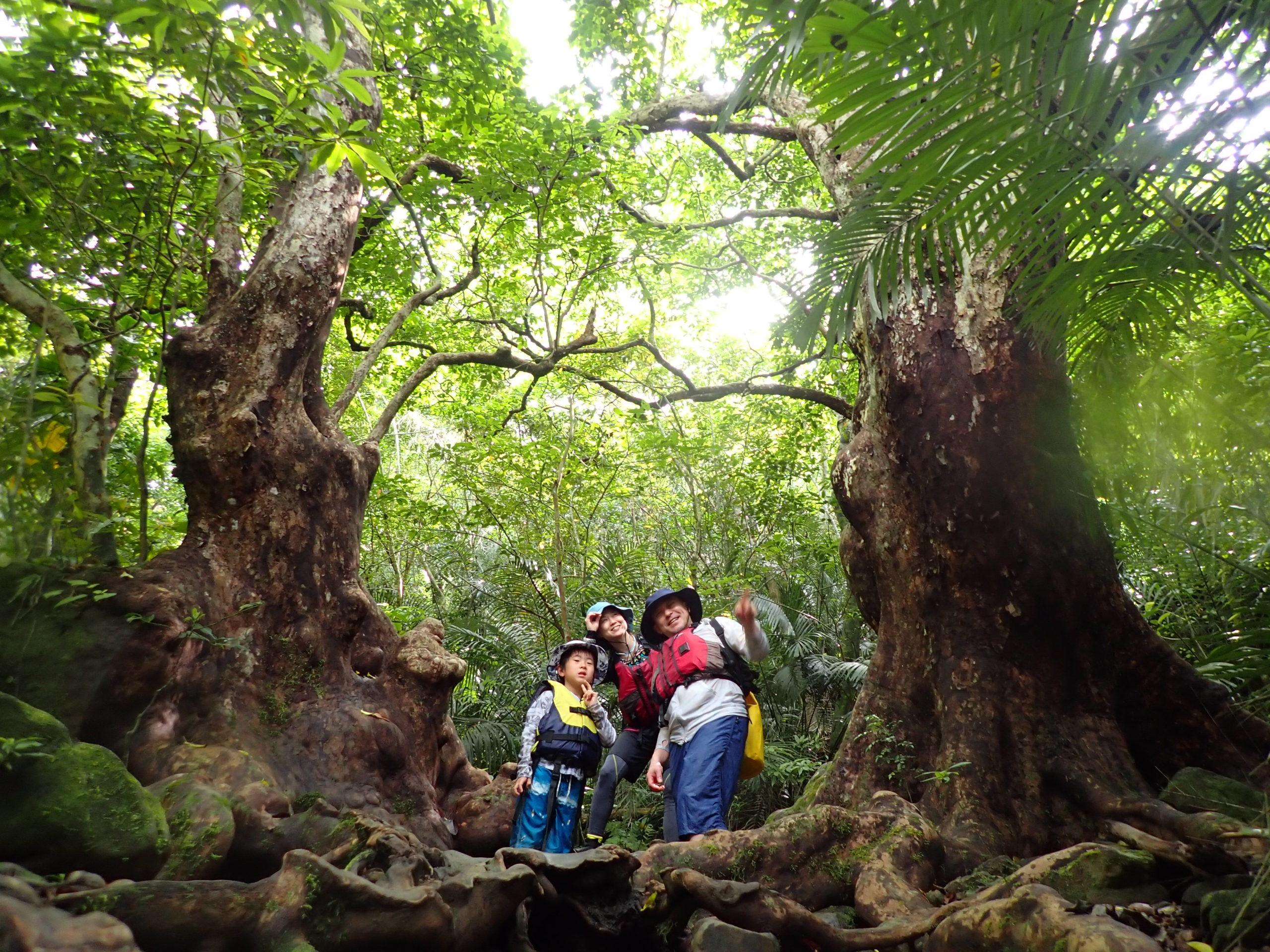 小さな体で大冒険!家族旅行は西表島で一生忘れない経験を。ピナイサーラの滝カヌー&由布島ツアー
