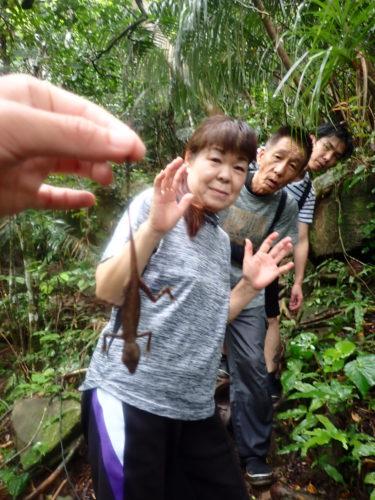 ジャングルをすっかり貸切!西表島 ピナイサーラの滝 カヌー 半日ツアー